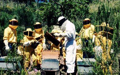 Què és el projecte Bee Happy o com les abelles milloren l'ecosistema de Viladecans