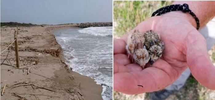 La regressió del litoral i la platja de Viladecans en temps de COVID-19